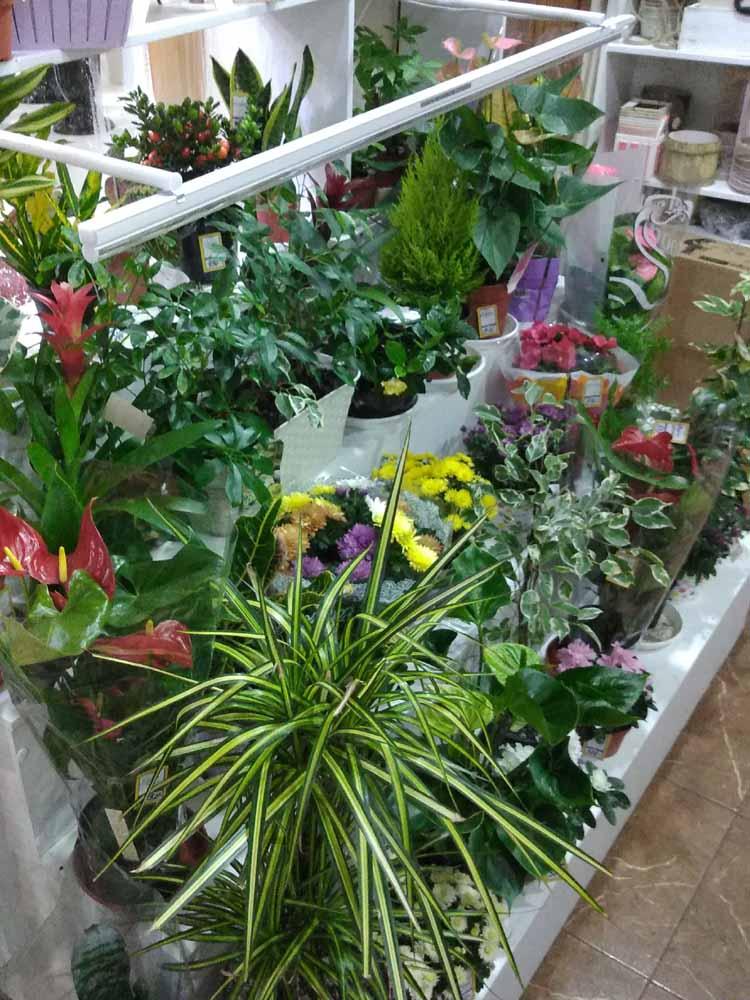 Горшечные растения в Новошахтинске